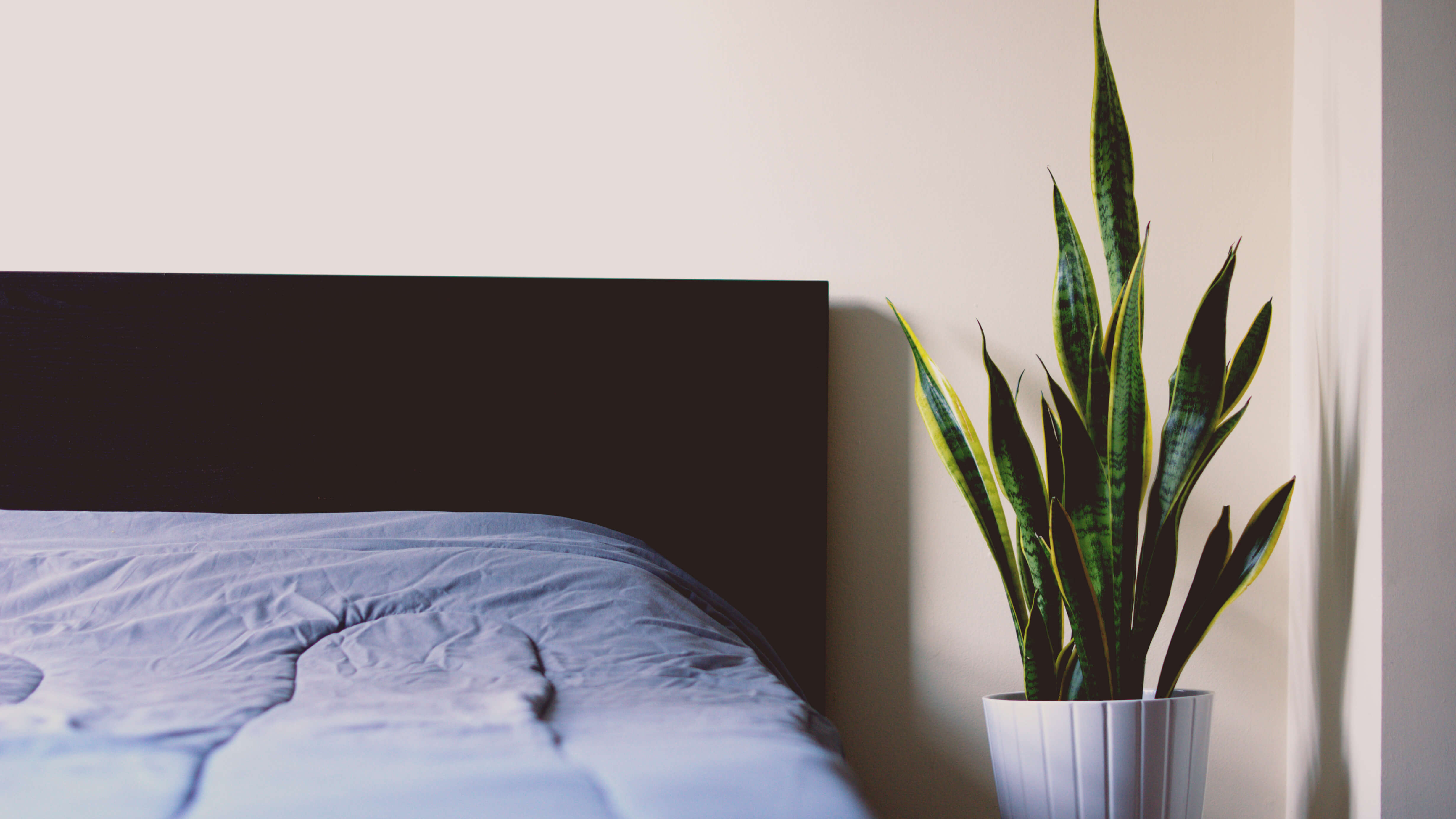 Bed and plant on side table